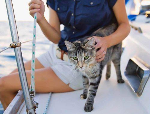 Crociera con cani e gatti