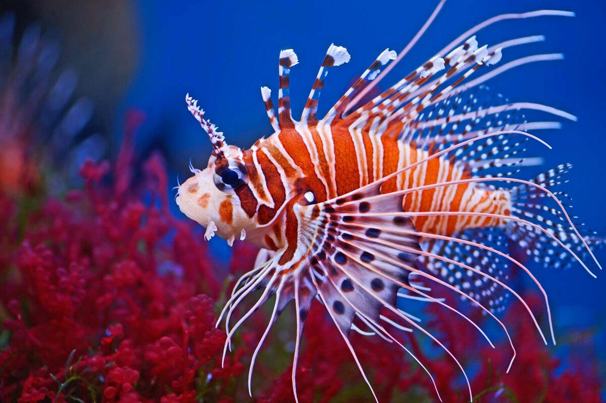 Pesci velenosi esotici mediterraneo